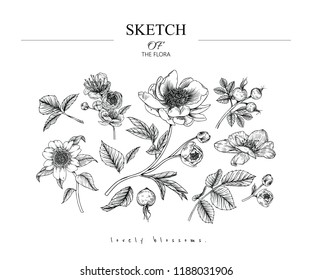 Sketch Floral Botany set. Cherry blossom, Peony, Camellia, Rose flower and leaf drawings. Black and white with line art on white backgrounds. Hand Drawn Botanical Illustrations.Vector.Vintage styles.