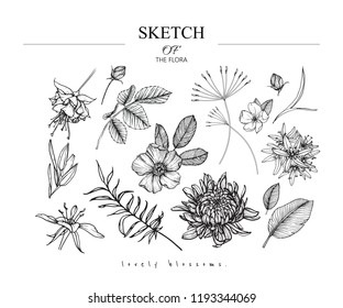 Sketch Floral Botany set. Chrysanthemum,Fuchsia,Wild rose, Camassia,Primrose flower and leaf drawings. Black and white with line art on white backgrounds. Hand Drawn Illustrations.Vintage styles.