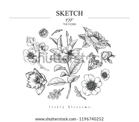 Sketch Floral Botany Set Magnolia Rose Stock Vector Royalty Free