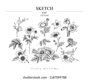 Sketch Floral Botany set. Magnolia,Peony,Fever few,Camellia, Narcissus,Daisy,Rose flower and leaf drawings. Black and white with line art on white backgrounds. Hand Drawn Illustrations.Vintage styles.