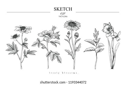 Sketch Floral Botany set. Peony, Rose, Daisy, Magnolia, Narcissus flower and leaf drawings. Black and white with line art on white backgrounds. Hand Drawn Botanical Illustrations.Vector.Vintage styles