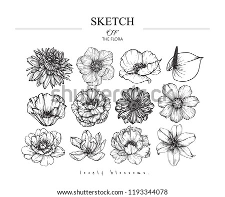 Sketch Floral Botany set