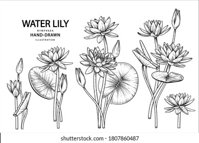 Sketch Floral decorative set. Water lily flower drawings. Black line art isolated on white backgrounds. Hand Drawn Botanical Illustrations. Elements vector.