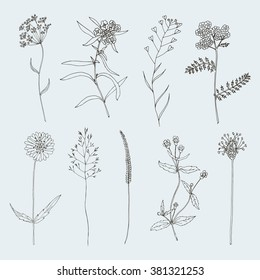 Sketch Flower set
