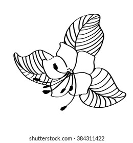 Sketch Flower Wild Rosemary. Hand drawn herbal design elements. Black and White Vector Illustration. Drawing for Tattoo.