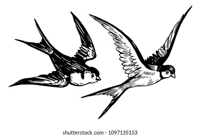 Sketch of flying swallows. Hand drawn illustration converted to vector