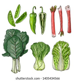 Sketch of food. Collards, Snow Peas, Rhubarb, Anaheim Peppers, Napa Cabbage, Bok Choy. Vector drawing of spices.