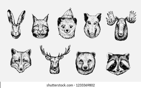 Sketch of forest animals: hare, lynx, marten, boar, moose, wolf, deer, fox, bear, racoon
