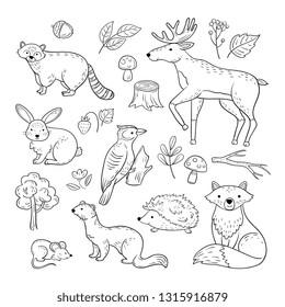 Sketch forest animals. Woodland cute baby animal raccoon elk hare woodpecker hedgehog marten fox children doodle vector hand drawn set