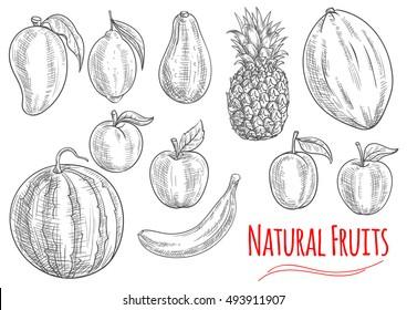 Sketch of fresh fruits with banana, apple, lemon, peach, pineapple, watermelon, plum, mango, melon and avocado fruits. Natural healthy vegetarian dessert juice cocktail design