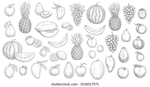Sketch fruits isolated vector icons watermelon, pineapple, peach and mango with kiwi. Farm market, orchard or store garden and tropic exotic fruits banana, avocado, lemon with grapes and melon set