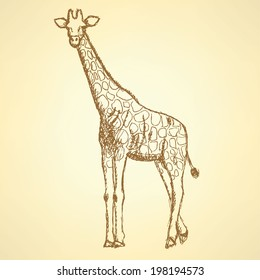 Sketch giraffe, vector vintage background eps 10