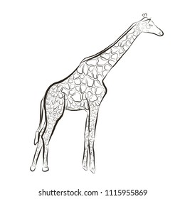 Sketch hand draw animal in Zoo park. Wild Vector Giraffe