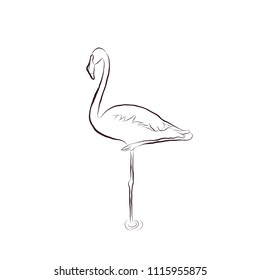 Sketch hand draw Flamingo bird stands on one leg