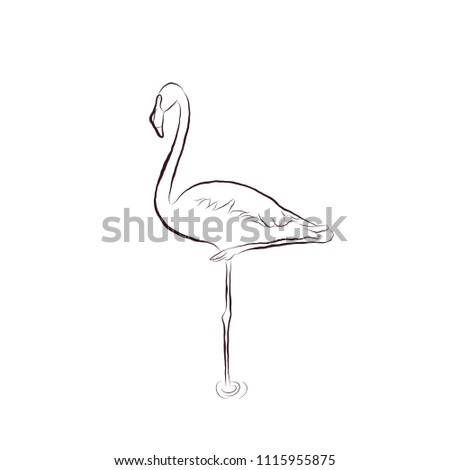 Sketch Hand Draw Flamingo Bird Stands Stock Vector Royalty Free
