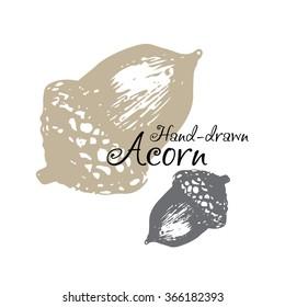 Sketch hand drawing acorn. Logo design for acorns