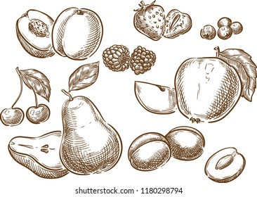 Sketch hand drawn fruits illustration, engraving, ink, line art. Creative conceptual vector.