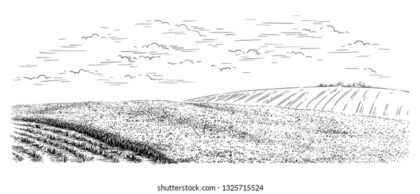 sketch hand drawn harvesting from the field using a combine different stages of cleaning vector illustration