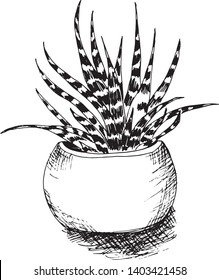 Sketch hand drawn illustration of cactus in the flower pot