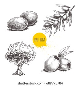 Sketch hand drawn olives set. Olive tree, olive fruits , boneless olives and olive branch with leaves. Vector illustration isolated on white background.