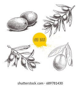 Sketch hand drawn olives set. Olive fruits bunch  and olive branches with leaves. Vector illustration isolated on white background.
