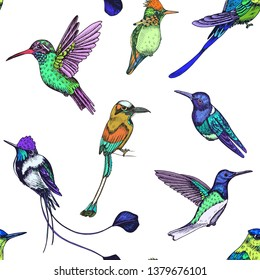 Sketch hand drawn pattern with hummingbird. Animals illustration colibri birds.