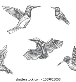 Sketch hand drawn pattern with kingfisher, hummingbird. Animals illustration birds.