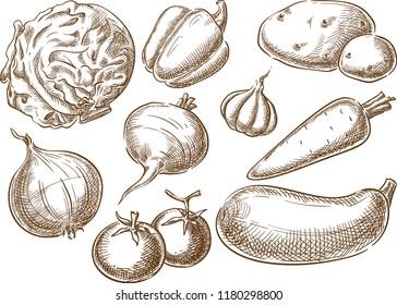 Sketch hand drawn vegetables illustration, engraving, ink, line art. Creative conceptual vector.