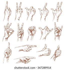 Sketch of hand gestures. Set of the different positions of the hands: count , victory sign, Shaka, okay,  pointing gesture, thumbs-up,  closed fist.