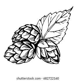 Sketch hops. Black illustration of hops for brewing.Engraved style illustration. Vintage beer design