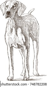 sketch of a hound dog