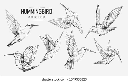Sketch of hummingbirds. Hand drawn illustration converted to vector