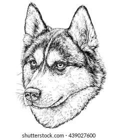 Sketch of Husky Dog. Vector Illustration