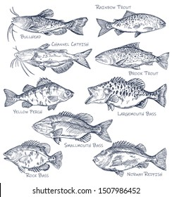 Sketch icons of seafood or water fish. Set of isolated brown bullhead, rainbow and brook trout, channel catfish, yellow perch and largemouth, rock bass, norway redfish. Side view on nautical wildlife