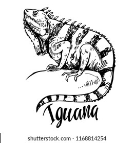 Sketch of iguana. Hand drawn illustration converted to vector