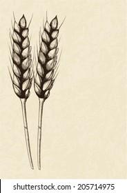 Sketch illustration of wheat