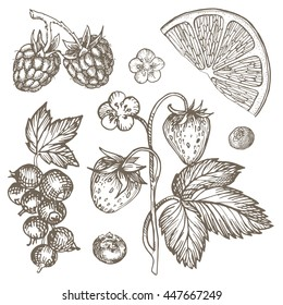 Sketch Ink hand-drawn illustration in vintage style. Healthy and organic food. Image raspberry, strawberry bush, orange, currants and blueberries.