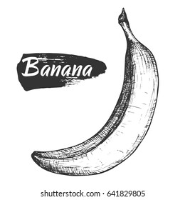 Sketch ink vintage banana illustration, draft silhouette drawing, black isolated on white background. Food graphic etching design.