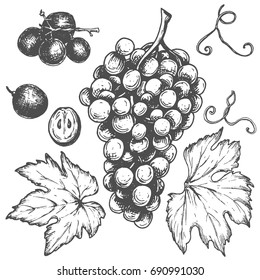 Sketch ink vintage grape set illustration, draft silhouette drawing, black isolated on white background. Food graphic etching design.