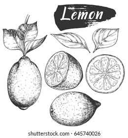 Sketch ink vintage lemon set illustration, draft silhouette drawing, black isolated on white background. Food graphic etching design.
