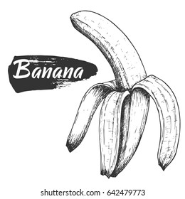 Sketch ink vintage open banana illustration, draft silhouette drawing, black isolated on white background. Food graphic etching design.