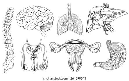 Female Organs Picture Images Stock Photos Vectors Shutterstock