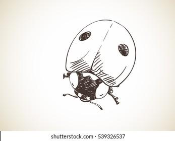 Sketch of ladybug, Hand drawn vector illustration