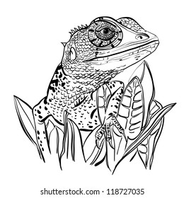 Sketch of a lizard sitting on a leafs on a white background