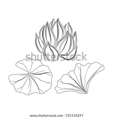 Sketch lotus flower leafsvector illustration stock vector royalty sketch of lotus flower and leafsctor illustration mightylinksfo