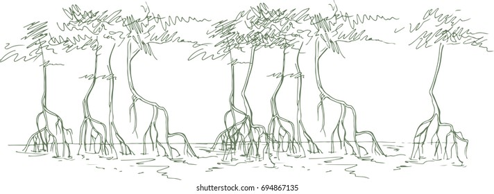 Mangrove Tree Images Stock Photos Vectors Shutterstock