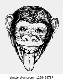 Sketch of a monkey head. Chimpanzee. Hand drawn sketch converted to vector