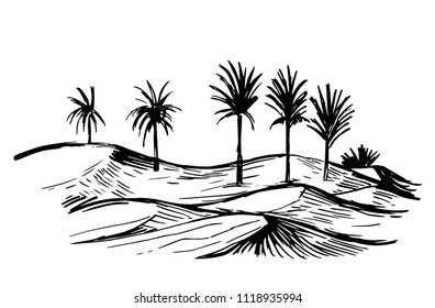 Sketch of oasis in the desert. Hand drawn illustration converted to vector