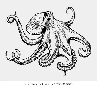 Sketch octopus. Hand drawn illustration converted to vector