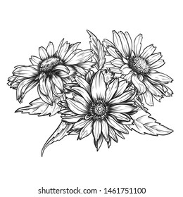 Sketch pen and ink vintage daisies bouquet  illustration, draft silhouette drawing, black isolated on white background. Botanical graphic etching design.